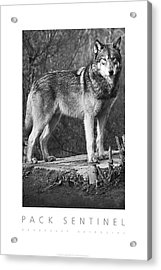 Pack Sentinel Naturally Defensive Poster Acrylic Print by David Davies