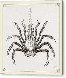 Pactulus Boscii Acrylic Print by Litz Collection