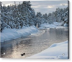 Paddling Up The Snowy River Acrylic Print