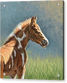 Paint Filly Acrylic Print by Paul Krapf