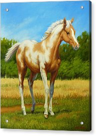 Acrylic Print featuring the painting Paint Foal by Margaret Stockdale