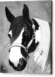 Paint Horse Acrylic Print by Olde Time  Mercantile