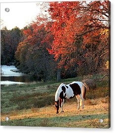 Paint Horse In The Fall Acrylic Print