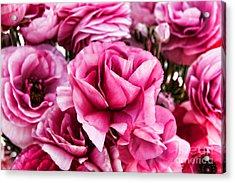 Paint Me Pink Ranunculus Flowers By Diana Sainz Acrylic Print
