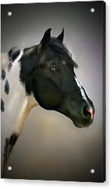 Paint Stallion Acrylic Print by Posey Clements