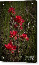 Paintbrush Acrylic Print by Jim McCain