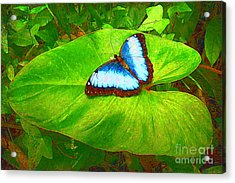 Painted Blue Morpho Acrylic Print