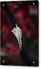 Painted By Light Acrylic Print