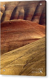 Painted Curves Acrylic Print by Mike  Dawson