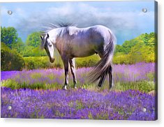 Painted For Lavender Acrylic Print