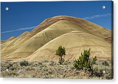 Acrylic Print featuring the photograph Painted Hills by Sonya Lang