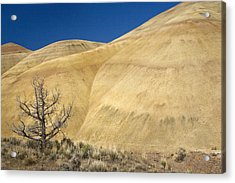 Acrylic Print featuring the photograph Painted Hills Tree by Sonya Lang