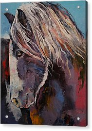 Highland Pony Acrylic Print by Michael Creese