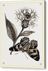 Painted Lady And Alpine Bluebottle Acrylic Print by Litz Collection