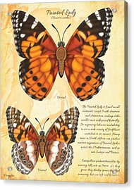 Painted Lady Butterfly Acrylic Print by Tammy Yee