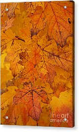 Painted Leaves Of Autumn Acrylic Print by Linda Shafer