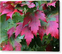 Painted Leaves Acrylic Print