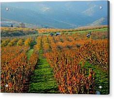 Painted Orchard Acrylic Print