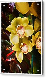 Painted Orchids Acrylic Print by John Haldane