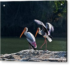 Painted Storks Acrylic Print by K Jayaram