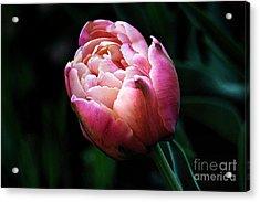 Painted Tulip Acrylic Print