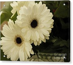 Painted White Flowers Acrylic Print