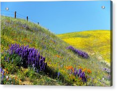 Painted With Wildflowers Acrylic Print