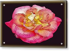 Painted Rose Acrylic Print by Dennis Dugan