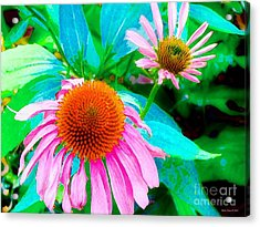 Painterly Coneflowers Acrylic Print by Annie Zeno