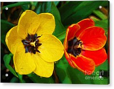 Painterly Red And Yellow Tulips  Acrylic Print