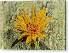 Painterly Sunflower Acrylic Print by Sandi OReilly