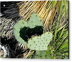 Pair Of Hearts Acrylic Print by Cindy Croal