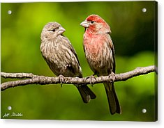 Pair Of House Finches In A Tree Acrylic Print