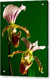 Pair Of Lady Slipper Orchids Acrylic Print by Elf Evans