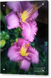 Pair Of Lilies Acrylic Print