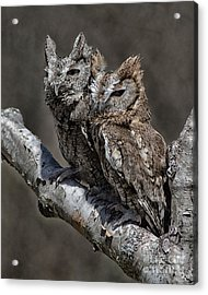 Acrylic Print featuring the photograph Pair Of Screech Owls by JRP Photography