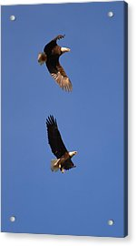 Pairs In Flight And Life Acrylic Print