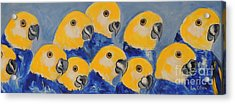 Acrylic Print featuring the painting Pale Head Parrots by Lyn Olsen