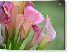 Pale Pink Blush Acrylic Print