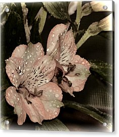 Pale Pink Lilies On Dark Background Acrylic Print
