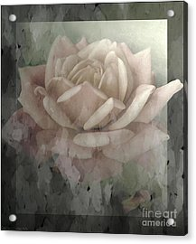 Pale Rose Photoart Acrylic Print by Debbie Portwood
