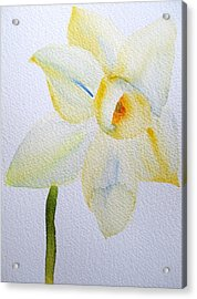 Pale Yellow Daffodil Acrylic Print by Sacha Grossel