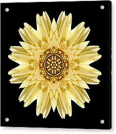 Acrylic Print featuring the photograph Pale Yellow Gerbera Daisy I Flower Mandala by David J Bookbinder
