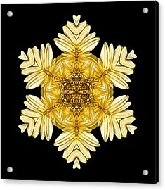 Acrylic Print featuring the photograph Pale Yellow Gerbera Daisy Vii Flower Mandalaflower Mandala by David J Bookbinder