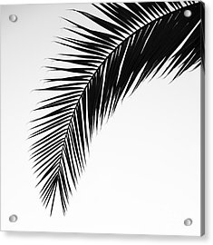 Palm Abstract Acrylic Print