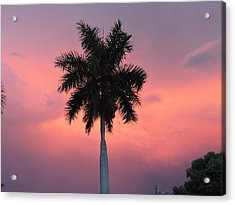 Palm Against Salmon Pink Acrylic Print by Beth Williams