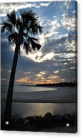 Palm And Sky Acrylic Print