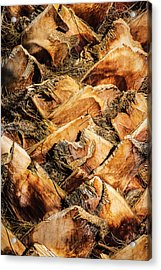 Palm Bark Acrylic Print