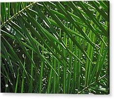 Palm Crosshatch Acrylic Print by Rona Black
