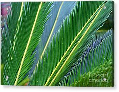 Palm Cycas Fronds Acrylic Print